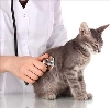 Ветеринарные клиники в Гайнах